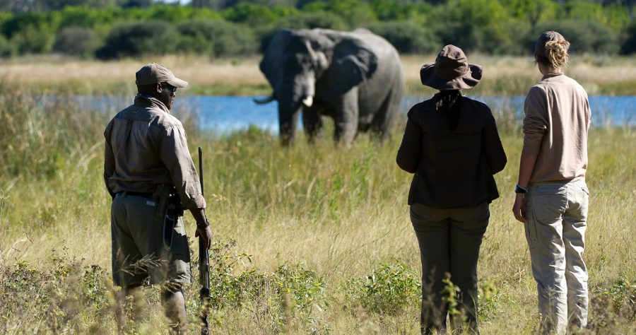 Extend Your Charter with a Botswana Wilderness Safari + Private Air